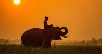 Танзания ужесточает правила въезда: туристы должны иметь при себе тест на COVID-19