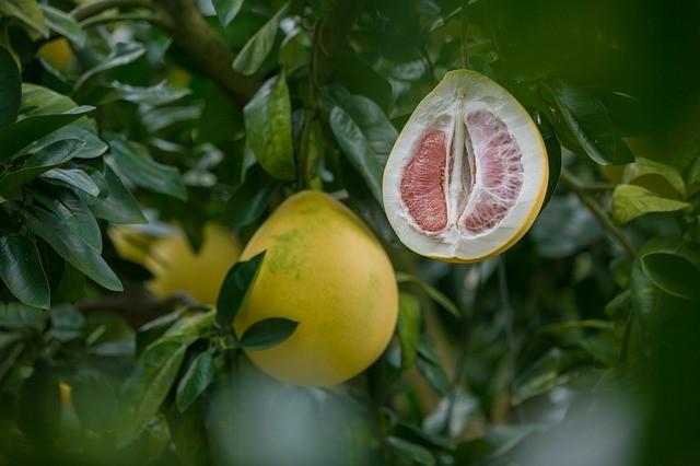 Что такое помело и чем оно полезно нашему организму?