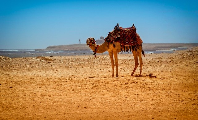 Египет обещает наилучшие цены для российских туристов