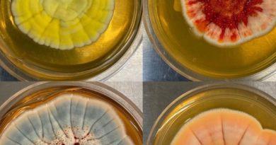 В поисках «нового пенициллина»: биотех-стартап с корнями в Стэнфорде привлек $47 млн на создание лекарств из грибов