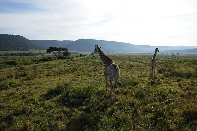 ЮАР изменил правила приема туристов