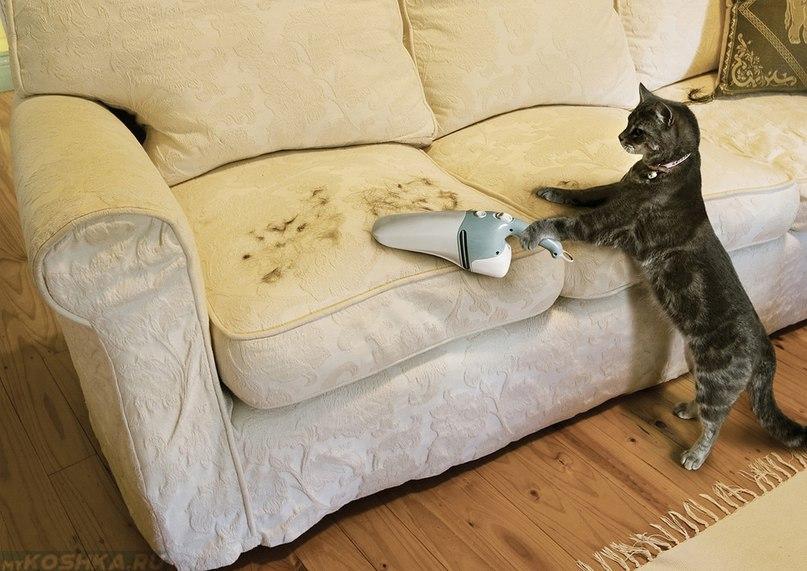 Как удалить запах кошки с дивана