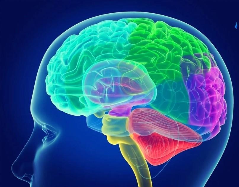 Сколько информации может вместить наш мозг