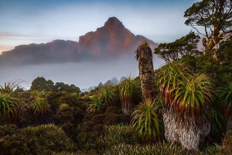 Три причины побывать в Тасмании