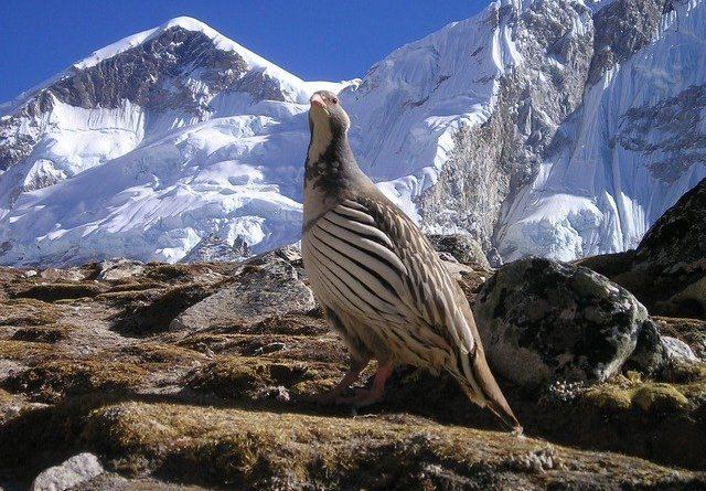 Непал открылся для альпинистов и путешествующих группой