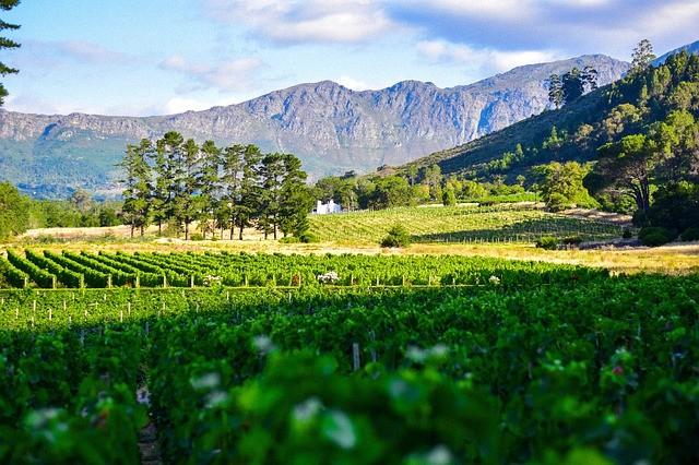 Первый в России винный парк откроется в Крыму