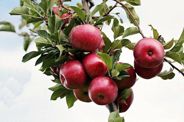 Почему полезно есть яблоки каждый день?