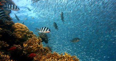 Тайны океанов: топ интересных фактов