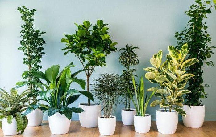 Вредители и болезни комнатных растений