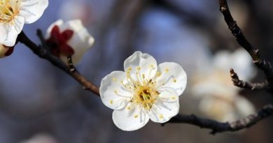 5 деревьев, которые высаживают весной