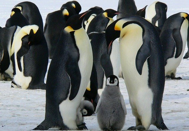 "Антарктида утратила статус ""континент без коронавируса"""