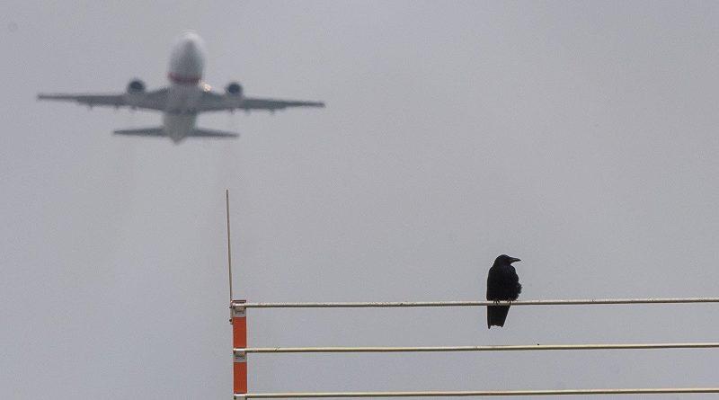 Что будет, если в двигатель самолета попадет птица