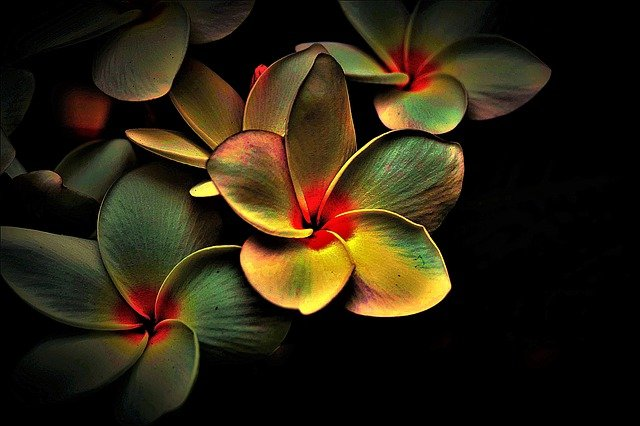 Распространенные причины отсутствия цветения у домашних растений