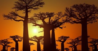 10 самых необычных деревьев планеты