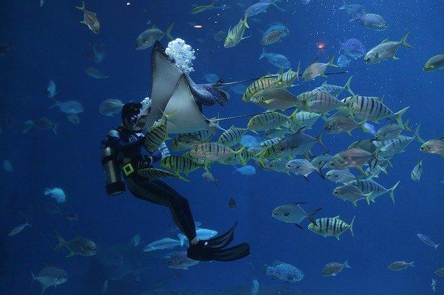 10 самых опасных морских существ