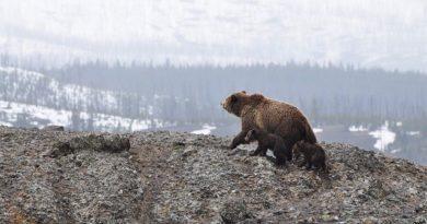 Аляска - нужна ли она была американцам?