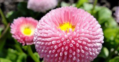 Какие цветы сажают на рассаду в феврале?