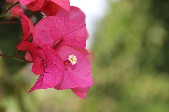 Комнатные растения - денежные талисманы