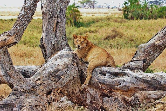 Национальный парк Серенгети (Танзания и Кения)