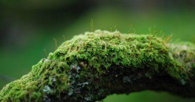 Природный индикатор чистоты воздуха — кто он?