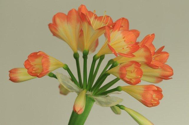 Растения в интерьере: выбираем красоту с пользой