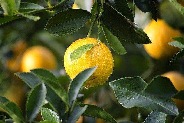7 интересных фактов о лимонах, о которых не знают