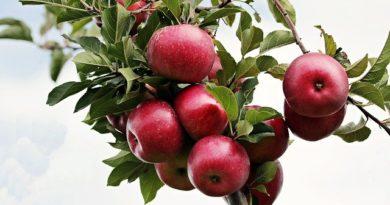 Чем подкормить яблоню, чтобы плоды не осыпались