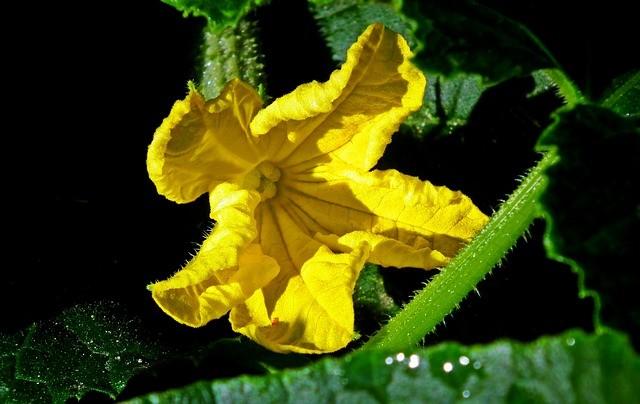 Что нужно огурцам для богатого и вкусного урожая