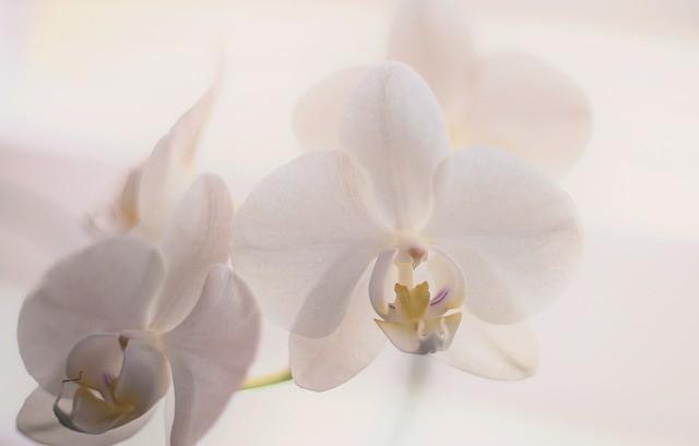 Как сделать цветение комнатных растений долгим и пышным