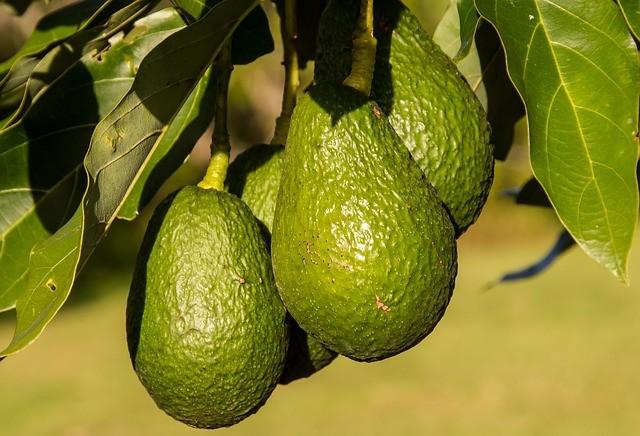 Как выбрать спелое авокадо: ошибки покупателей в магазинах и на рынках