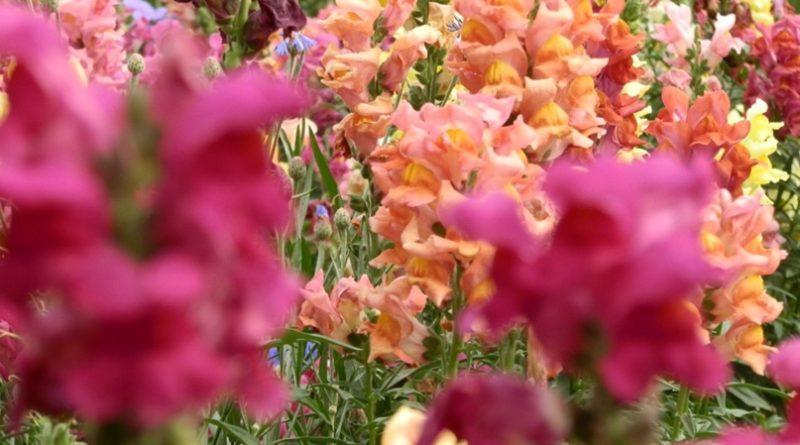 Какие цветы посадить в марте