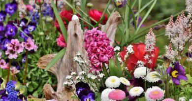 Красивая клумба — настоящее украшение дачного участка