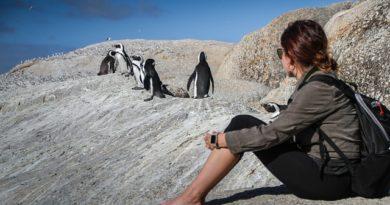 Не дикие, а свободные: где пообщаться с животными на их территории?