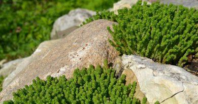 Обустройство альпийской горки: идеи для оригинального ландшафта
