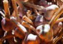 Правила посадки чеснока