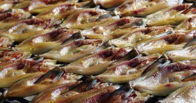Правильно упаковать рыбу, чтобы в дороге не испортилась
