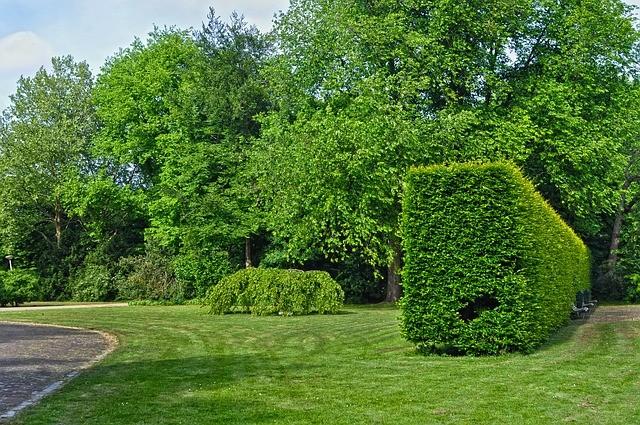 Растения для создания живой изгороди