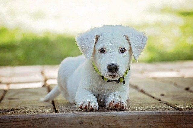 Собака для загородного дома: сделать правильный выбор