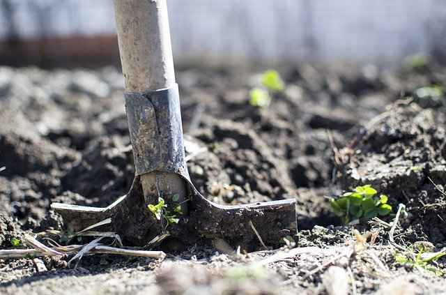 Спички как действенное средство спасения пропадающего растения