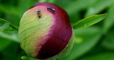 Топ-11 безопасных способов борьбы с муравьями на огороде