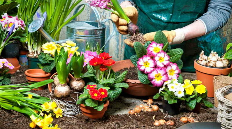 Распространенные ошибки при создании цветников