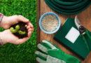Зимняя зелень на подоконнике: какие растения выбрать и как вырастить