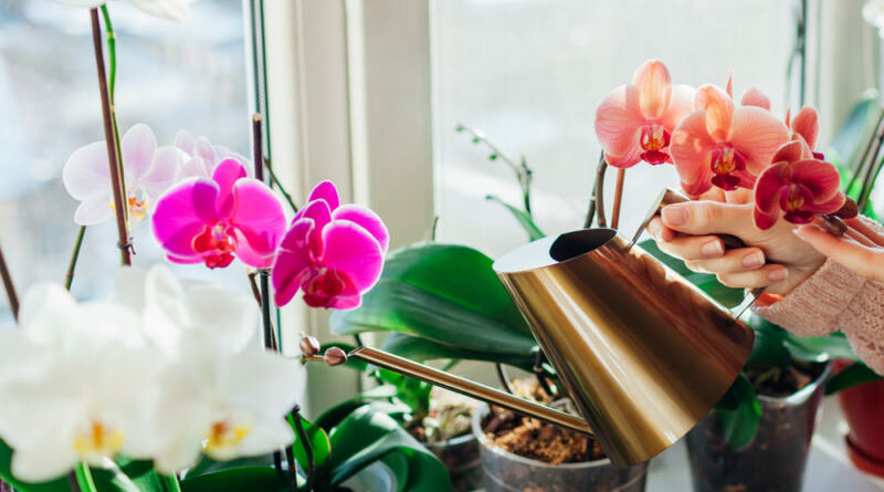 Эффективная стимуляция цветения орхидеи
