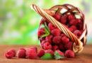 Как увеличить урожай малины в несколько раз: секреты правильной обрезки