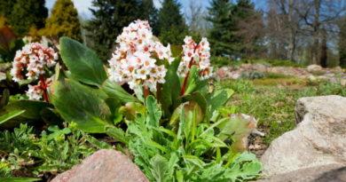 Лучшие цветущие и вечнозеленые многолетники для дачного участка