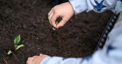 Приготовление универсального грунта для рассады: 5 лучших рецептов