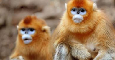 22 животных с удивительной, странной и фантастической внешностью