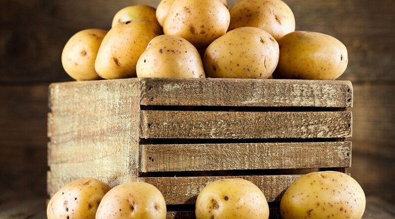 Заболевания, из-за которых гниет картофель при хранении. Как предотвратить потери